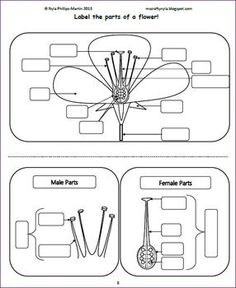 Parts of a Flower Activities -Worksheets -Flash Cards -Craft -Quiz – Word Wall - Modern Science Crafts, Science Experiments Kids, Science For Kids, Science Projects, Science Worksheets, Science Curriculum, Science Classroom, 6th Grade Science, Middle School Science