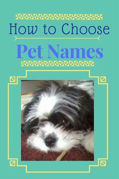 dog names , cat names , rabbit , hamster , guninea pigs ,#petnames How to choose?
