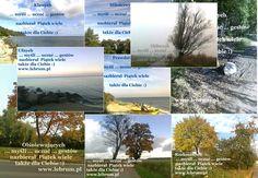 Piątek ... jesień 2014 ...  .... więcej na blogach : Przemyślenia o poranku : http://pierwszamysl.blogspot.com/ o szukaniu pracy : http://bez-etatu.blogspot.com/ Widok z okna i komentarz poranka: http://jakimon.blogspot.com o miłosnych perypetiach : http://iruchna.blogspot.com