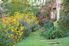 Enjoy Color All Season: The Back Garden