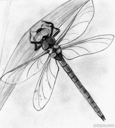 Drawing Contest Pictures of Dragonfly - Image Page 1 . Dragonfly Drawing, Dragonfly Painting, Dragonfly Art, Dragonfly Tattoo, Animal Sketches, Drawing Sketches, Pencil Drawings, Art Drawings, Sketching