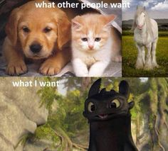 """I have a toothless.his name is Big Cat Toothless Baby Rock. Check him out in """"kitty does strange things"""" board. Httyd Dragons, Dreamworks Dragons, Disney And Dreamworks, Httyd 2, How To Train Dragon, How To Train Your, Croque Mou, Funny Animals, Cute Animals"""