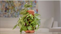 Terraplanter, a project on Kickstarter, is a hydroponic planting pot where the plant grows on the exterior. Best of all, it's dirt free. Hydroponic Plants, Hydroponics, Chia Pet, Growing Plants Indoors, Home Goods Decor, Container Gardening, Indoor Gardening, Edible Garden, Plant Decor