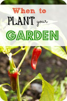 Have you wondered when the bet time is to plant your garden? Here is a list of the crops that you can plant and when.