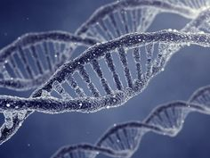 An artist's rendering of DNA double helix molecules and chromosomes.