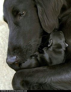Mamma dog and baby puppy