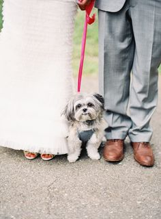 Fred and I couldn't have been happier sharing the day (and a few photos) with our fur baby Miles. He's our everything!
