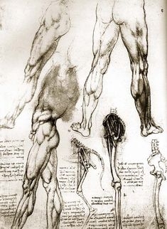 Studies of human legs, and the bones of the leg in a man and in a dog by Leonardo Da Vinci, circa 1504 Human Anatomy Drawing, Anatomy Study, Body Anatomy, Anatomy Reference, Male Figure Drawing, Life Drawing, Da Vinci Inventions, Medical Drawings, Leg Art