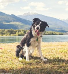Collected by photographer Andrew Knapp, the book features his border collie Momo, who loves to hide in unusual places and have his picture t...