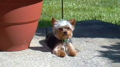 Lewy enjoying the sun ( Looks like Stormy except Stormy's eyes are more round.)