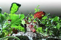 Fal, Plants, Plant, Planets