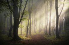 Les superbes photos de forêt de Toma Bonciu  2Tout2Rien