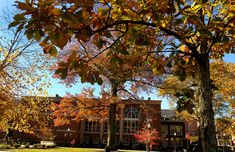 Campus leaves by California University of Pennsylvania, via Flickr