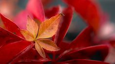 Autumn in Norway Abstract Nature, Macro Photography, Norway, Autumn, Plants, Fall, Flora, Plant, Planting