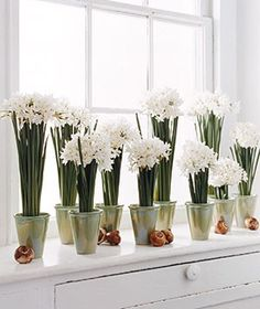 Paperwhites are gorgeous, inexpensive and a simple way to decorate during the holidays.