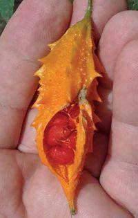 Uma planta muito simples consegue matar até 98% de células cancerígenas e também frear o diabetes