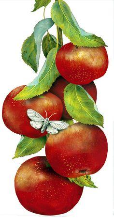 Watercolor Fruit, Fruit Painting, Dish Towels, Tea Towels, Food Clipart, Kitchen Artwork, Garden Labels, Decoupage Vintage, Fruit Art