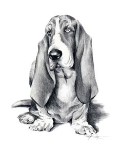 This BASSET HOUND Dog Drawing Art Print by Artist DJ Rogers is just one of the custom, handmade pieces you'll find in our giclée shops. Bassett Hound, Animal Drawings, Art Drawings, Drawing Art, Drawing Animals, Basset Hound Dog, Aggressive Dog, German Shorthaired Pointer, Dog Behavior