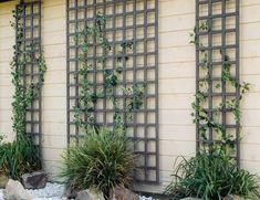 Опоры для вьющихся растений своими руками: арки, шпалеры, сетки