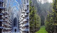 talian artist Guiliano Mauri is the father of this spectacular Cattedrale Vegetale (Tree Cathedral), a unique building created out of rows of real living trees.