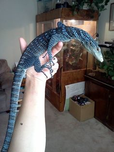 Newest Photographs Reptile Terrarium Lizards Strategies There Isn't Any Doubt neueste fotos reptile. Les Reptiles, Cute Reptiles, Reptiles And Amphibians, Mammals, Animals And Pets, Cute Animals, Terrarium Reptile, Reptile Room, Reptile Pets