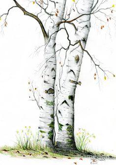 White Birch by Mary Tuomi White Birch Painting - White Birch Fine Art Print Watercolor Trees, Watercolor Landscape, Landscape Art, Landscape Paintings, Watercolor Paintings, Encaustic Painting, Watercolours, Birch Tree Tattoos, Tattoo Tree