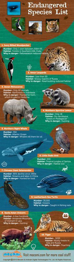 Read all about the World's Top 10 Endangered Species - Ivory Billed Woodpecker, Amur Leopards, Javan Rhinoceros, Northern Sportive Lemur, Northern Right Whale, Little Dodo bird, Saola Asian Unicorn, Leatherback Sea Turtle, Chinese Giant Salamander and Tiger.