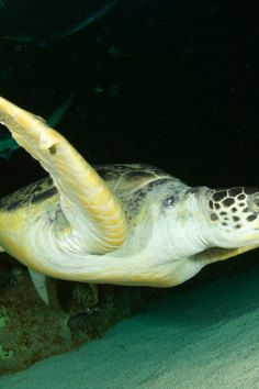 2000 different animals. 1.3 million gallon ship wreck aquarium. @Ashley Leach