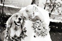 Pets In Wedding