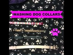 How To Wash A Dog Collar | Mypetlov.com
