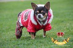moda canina, ropa para perros, abrigos