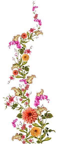 Botanical Flowers, Exotic Flowers, Botanical Prints, Beautiful Flowers, Flower Prints, Flower Art, Weed Art, Bunch Of Flowers, Watercolor Flowers