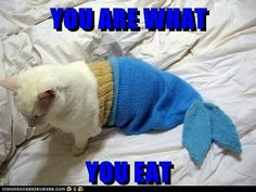 funny cat pictures - YOU ARE WHAT  YOU EAT