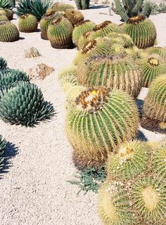 Barrel cactus in the desert. I came to appreciate these plants while living in Phoenix