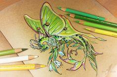 Lunar moth dragon by AlviaAlcedo.deviantart.com on @DeviantArt
