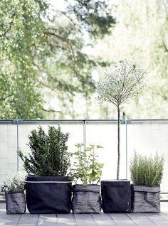 Tips till uteplatsen (Add simplicity) Terrace Garden, Garden Pots, Pot Plante, Patio Plants, Diy Planters, Plantation, Interior Exterior, Dream Garden, Garden Inspiration