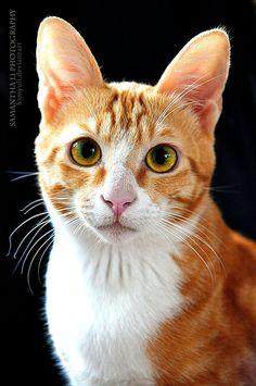 Cat portrait (by SamanthaLi)