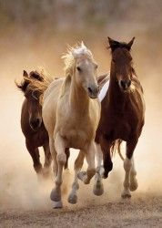 Image of product Clementoni 39168 - Running Horses - Jigsaw 1000 pieces