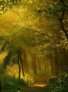 I love how the sun filters through the trees onto this woodland path.