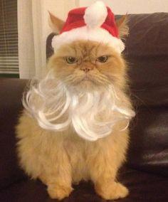 Кот Санта