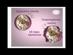 Презентация JEUNESSE в России Что делают стволовые клетки