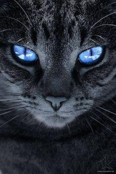 De beaux yeux bleus.
