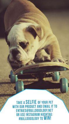 Win awesome stuff!   #bulldogs #pets #dogs #skateboarding #bullies #funny #fun #animals #free #win #selfie