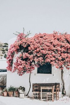 days of camille: trip in greece: les cyclades - paros Bougainvillea, Beaux Villages, Adventure Is Out There, Belle Photo, The Places Youll Go, Outdoor Living, Scenery, Around The Worlds, Paros Greece