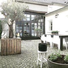 Tuinset gepoetst en de eerste plantjes zijn er! Begint nu ook in Limburg de zon te schijnen☀️ Tijd voor een kopje koffie Fijne middag iedereen! #thuis #olijfboom #binnenplaatsje #bijnavoorjaar