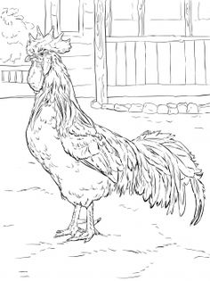 free chicken hen rooster coloring pages pictures brown leghorn rooster coloring page free printable coloring free pictures hen rooster pages chicken Fox Coloring Page, Animal Coloring Pages, Colouring Pages, Adult Coloring Pages, Coloring Books, Coloring Sheets, Rooster Painting, Rooster Art, Chicken Coloring Pages