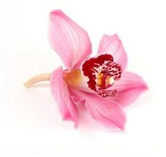 Floristerías venta al por mayor Mayesh - Buscar nuestra Biblioteca de la flor