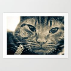 Cat! Art Print by Pixie Myers - $24.99