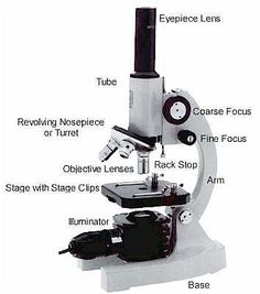 A study of the microscope and its functions with a labeled diagram the parts of a microscope ccuart Choice Image