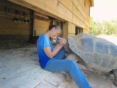 Friendly tortoises are friendly.
